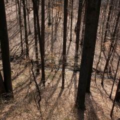 Wilmington trees