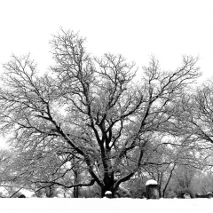 Tree of Life, Lewes, DE